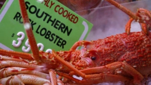 Rock lobster with preserved lemon and coriander guacamole ...
