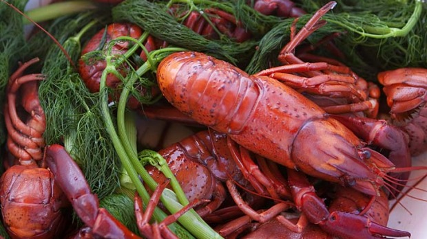 marron boiled with fennel fronds recipe good food