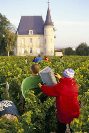Rich harvest … 2012 saw the release of one of the greatest Bordeaux vintages.
