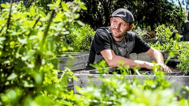 Sean McConnell works in one of the community gardens in New Acton.
