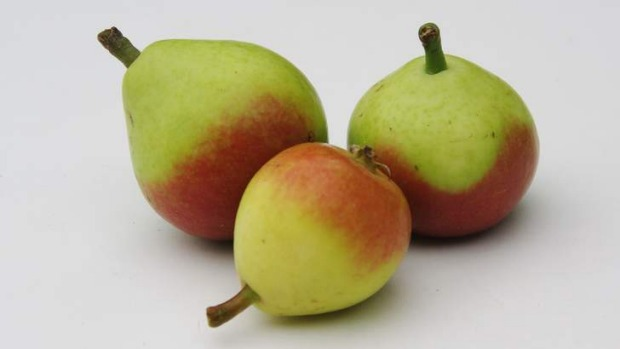 Paradise pears are also known as faccia bella.