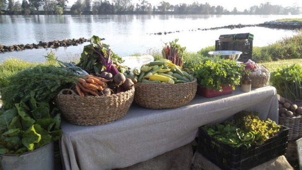 Saffery and Patrick's Queen Street Growers produce by the Moruya River.