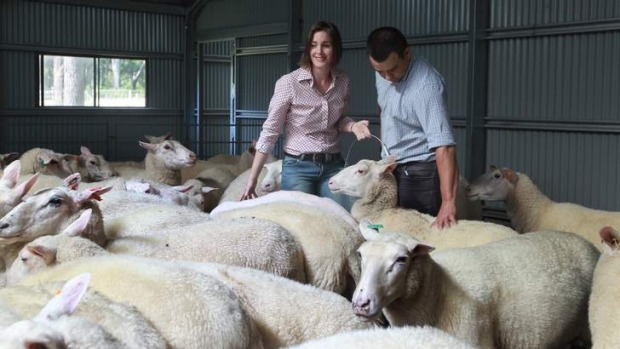 Cheesemakers Cressida and Michael McNamara of Pecora Dairy with some of their flock.