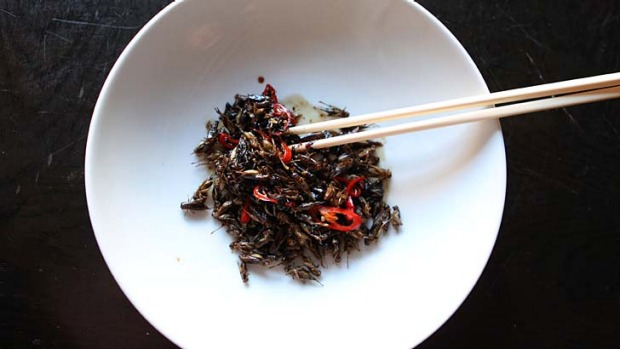 Tiny delicacies ...  crickets stir-fried with blackbean sauce and chilli.