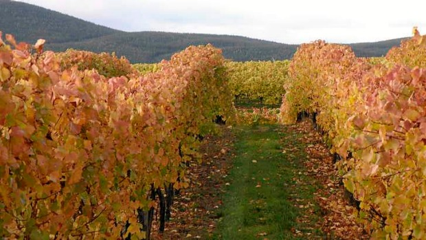 The Courabyra  Wines vineyard in Tumbarumba.