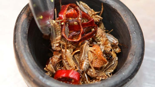 Roasted crickets from El Topo in Bondi Junction.