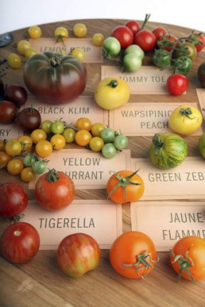 Pick of the crop: Heirloom tomatoes come in a range of shapes and colours.
