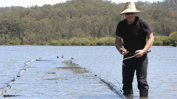 Making a splash ... Steve Feletti, owner of Moonlight Flat Oysters, at Batemans Bay.