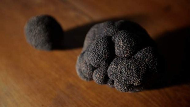 Professionally grown ... Black truffles.