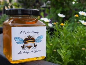 The Wayside Chapel's hive produces more than 30 kilograms of honey each year.