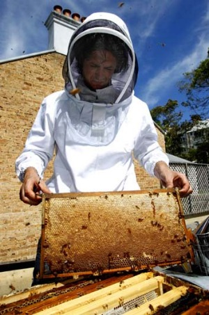 Hive a great idea: Colin Fassnidge with Four in Hand's bees.