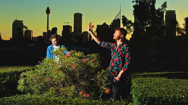 Harvest: Bartenders Christopher Thomas and Byron Woolfrey pick grevillea garnishes in Potts Point for cocktails at Trolley'd.
