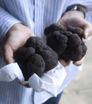 Growth phase: Australia's truffle industry is growing by about 30 per cent each year.