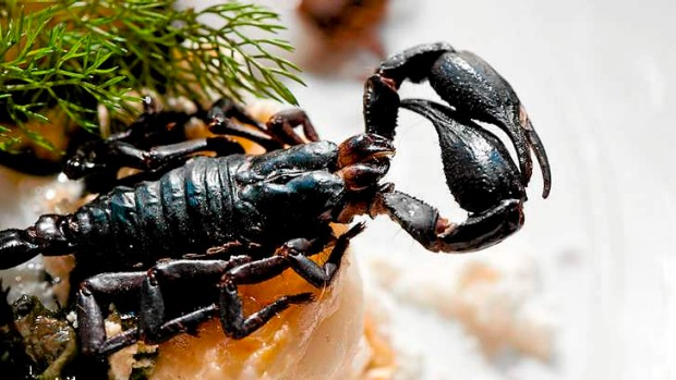 Public Bar and Restaurant will soon start serving wood-roasted scorpions with lobster snow, seaweed, pickled ginger foam ...