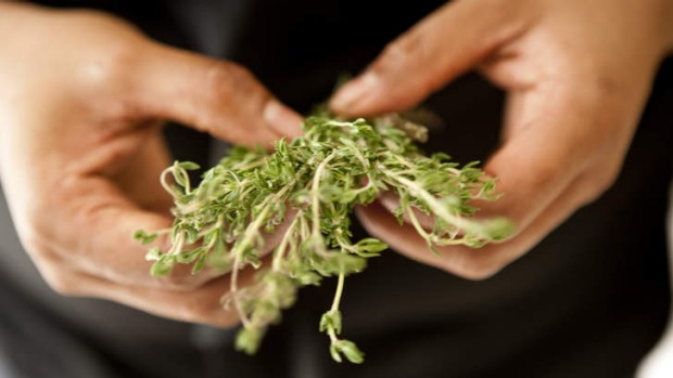 It's thyme: Fresh herb sprigs being prepared for a fennel and thyme tart.