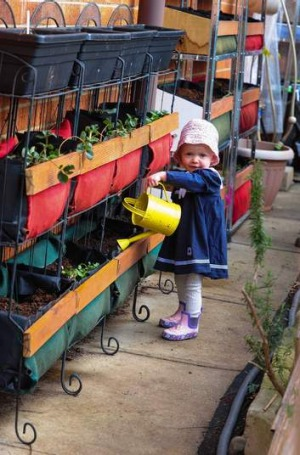 Cally Brennan's daughter Sophie, 7 months,  waters strawberries in their vertical vegetable patch.