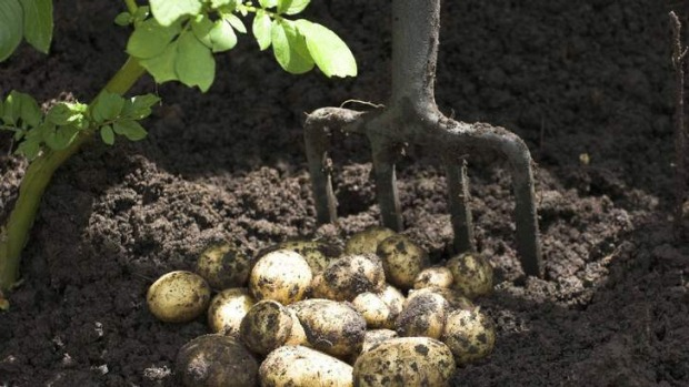 Growth factor ... An achievable target is to harvest 10 times the volume of the potatoes that you are planting.