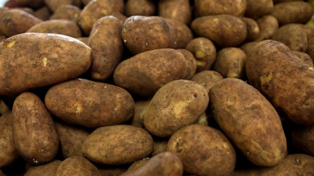 Dutch creams ... Potatoes are the world's fourth most popular food crop.