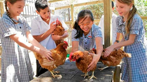 Staging a coop: Bondi Public School students from left, Ellen, Hugo, Victoria and Pinky with the school chickens.