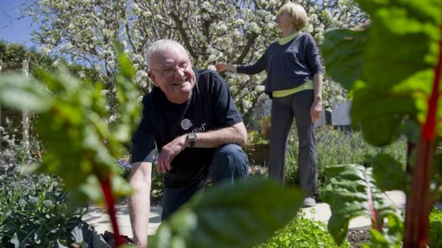 Dynamic duo ... Neville and Pam Bleakley in their Chifley garden, where he looks after the fruit and vegetable and she ...