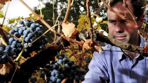 Our Rioja? ... Mount Majura winemaker Frank van de Loo says tempranillo is well suited to his site.