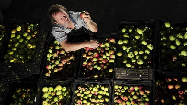 Old school ... Gary Sully-Watkins has been experimenting with  cider at  Reidsdale, near Braidwood, for the past five years.