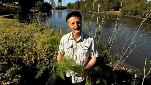 Free food: Diego Bonetto finds fennel during a tour in Tempe.