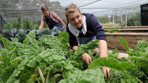 Harvest ... Student Daisy O'Malley-Welby and science teacher Fiona Buining using the Ho-Mi to work the raised garden ...