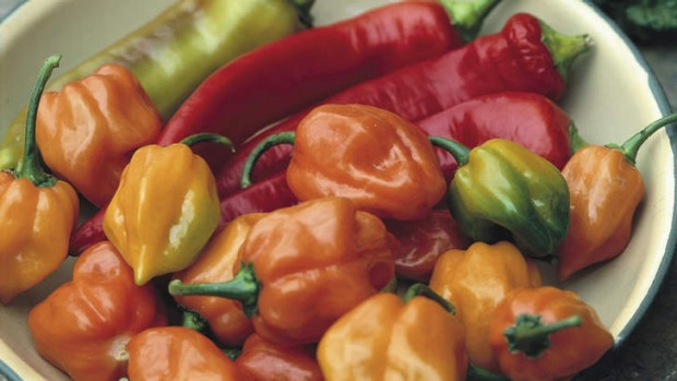 Heat's on ... Habaneros thrive in hot weather. The origins of these plants are in Central and South America