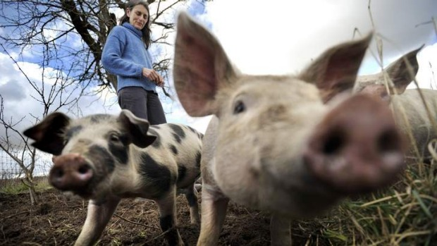 Clean and green ... Free-range pig farmer Claire Johnson, who farms pigs at Murringo with her husband, Sam Johnson.