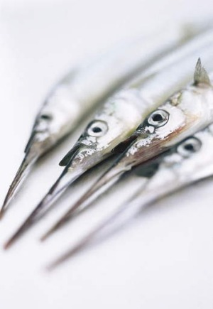 Point of English: The garfish and garlic are related through etymology alone.