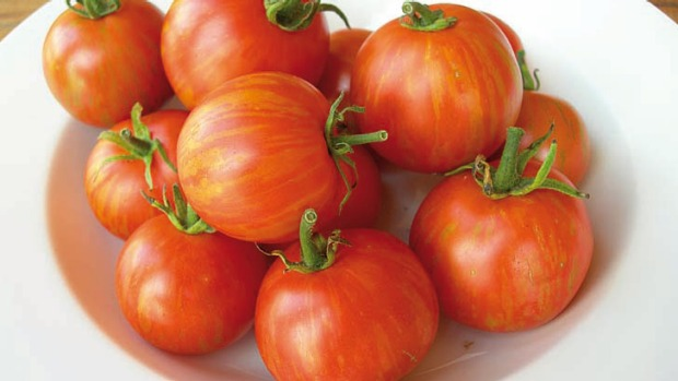 Prolific and easy to grow ... the heirloom Tomato Tigerella.