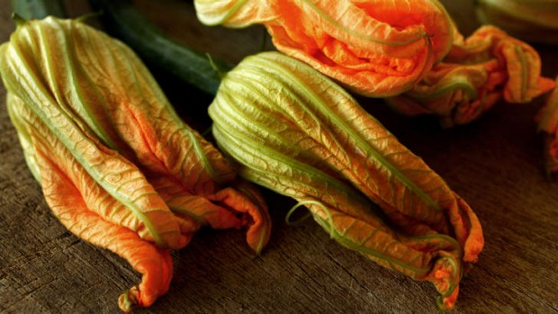 One of summer's fleeting pleasures: zucchini flowers.