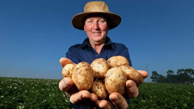 To market: Grower Bill Henderson has high hopes for his spuds.