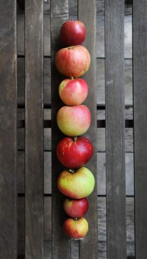Apples from the Loriendale Orchard. From top: Fuji, Twenty Ounce, Topaz, Grimes Golden, Bonza, Blenhein Orange, Red ...