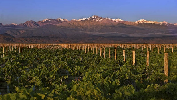 Land of contrasts: Malbec thrives on a strip below the Andes in Mendoza.