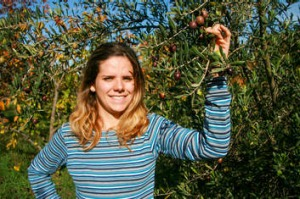 Easy pickings: Emma Bonell-Balp harvesting olives at Loriendale Orchard.