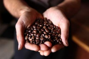 Under threat: climate change and pests may take coffee beans out of safe hands.