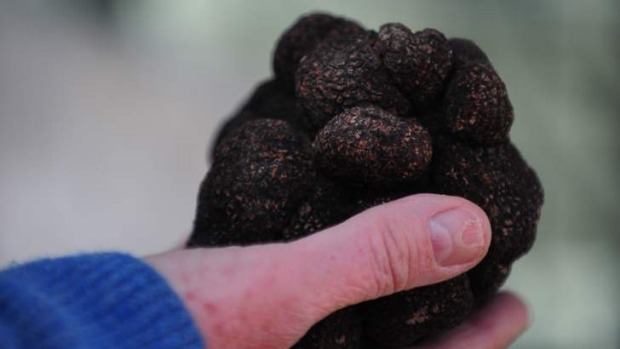 French black truffles: Canberra regional truffle festival will be held from July 18-27.