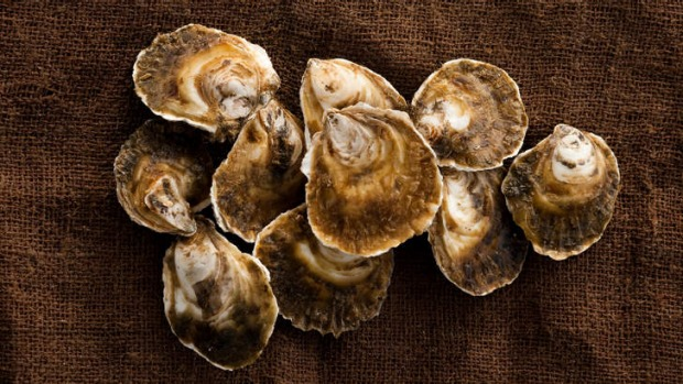 Native angasi oysters are also known as mud oysters and are big, fat and meaty.