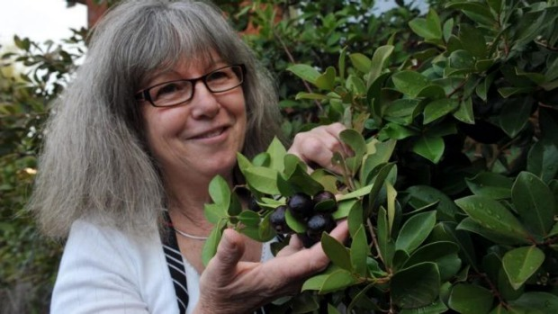 Berry nice: Dianne McGowan in her kitchen garden at Red Hill with her strawberry guava tree.