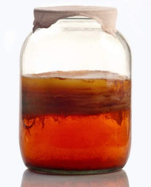 A jar of kombucha tea during fermentation.