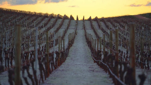 Global warning: Jansz is among the Tasmanian vineyards producing exciting pinot noir.