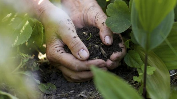 In your hands: Building the quality of your soil will allow your plants to naturally access nutrients.