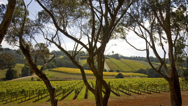 In demand: Vineyard-suitable land on the Mornington Peninsula is highly sought-after.