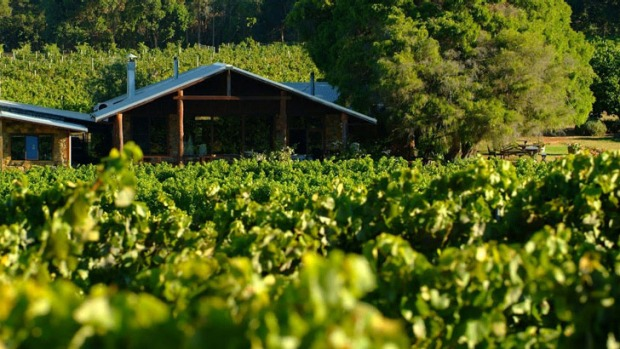 A paean to sustainable farming: The restaurant looks onto lush vineyards.
