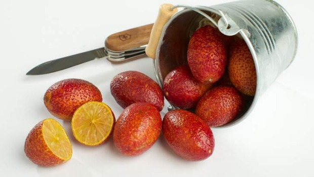 Burgundy beauty: Blood limes work well in chutneys and cordials.