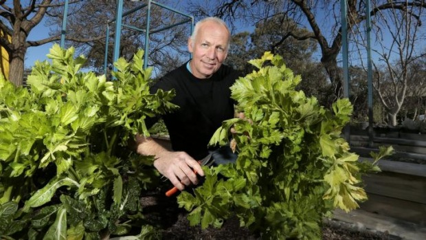 Dom Galloway harvesting celery from his Watson home.