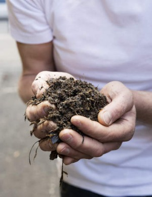 A handful of the concentrated compost.