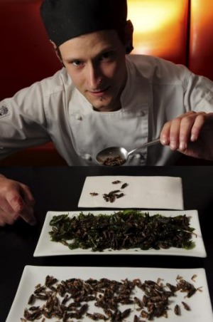 Apprentice chef Mark Thompson with a plate of roasted crickets.